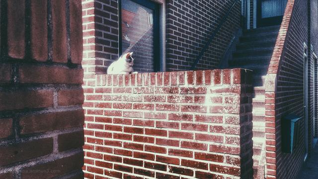 cat kat muurtje wall