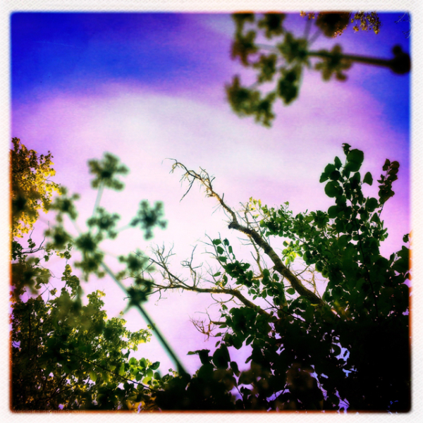 trees flowers bloemen bomen