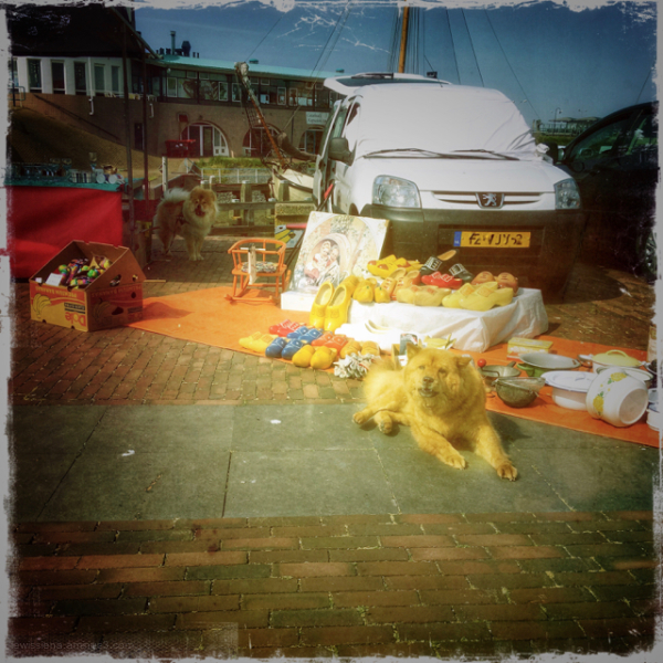 rommelmarkt fleamarket dog clog hond klompen