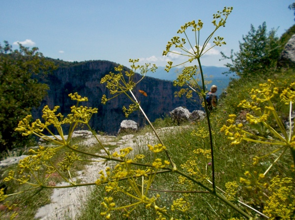 greece griekenland zagoria vikos gorge