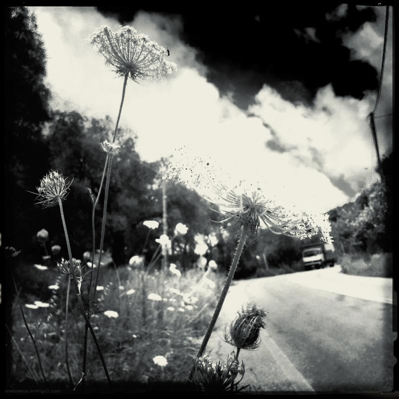 Bermbloemen flowers side road