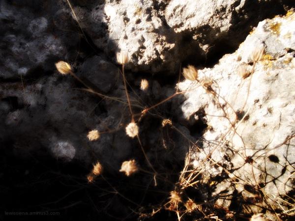 Rots rock bloem flower