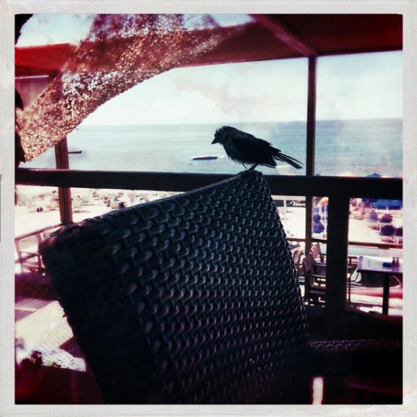 mus sparrow restaurant guest