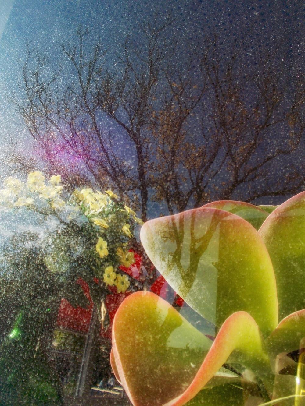 window reflections plants tree