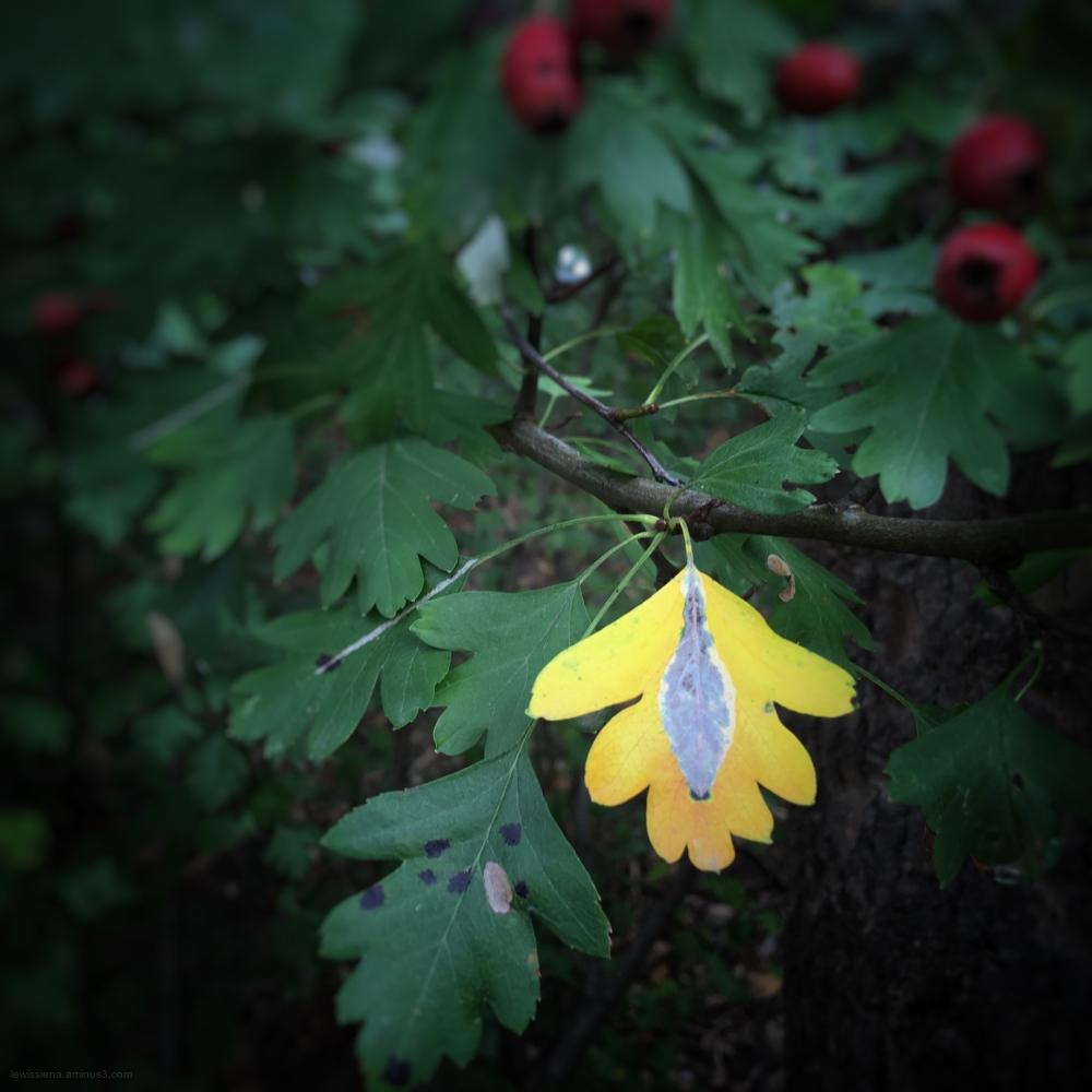 Blad leaf