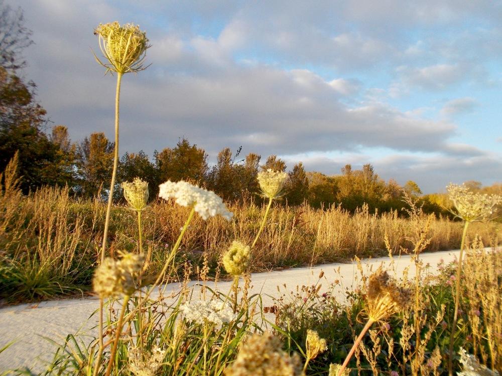Flowers path voetpad bermbloemen