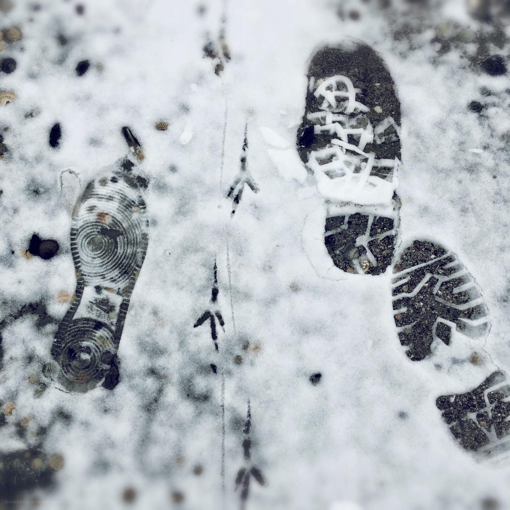 Beach strand footsteps prints