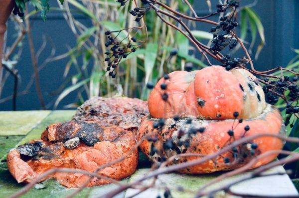 Pumpkin pompoen rotten verrot