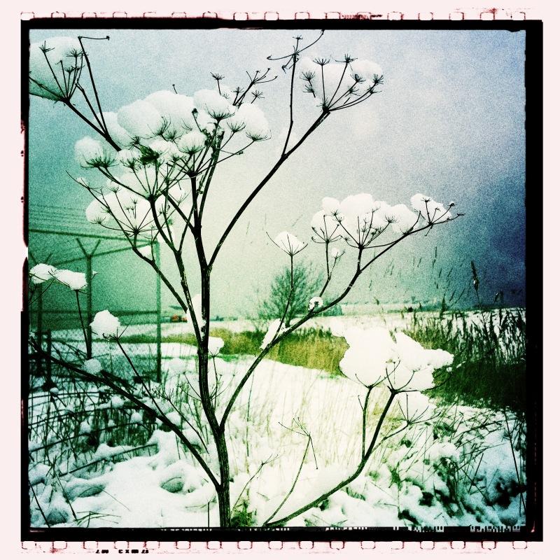 Sneeuw snow flower bloem