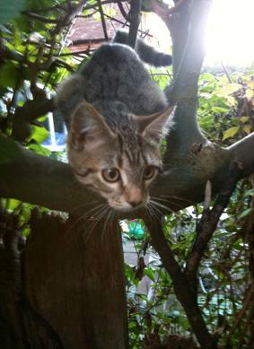 Boo's Kitten