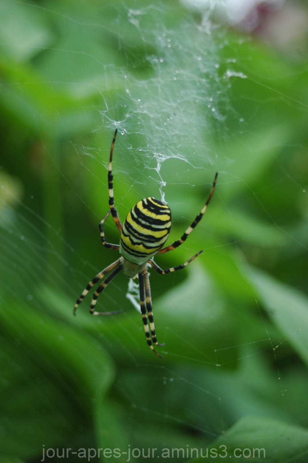 une jolie araignée au plafond....
