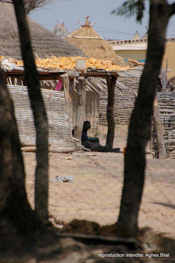 Sénégal 7