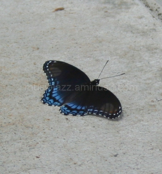 Blue on the wings!