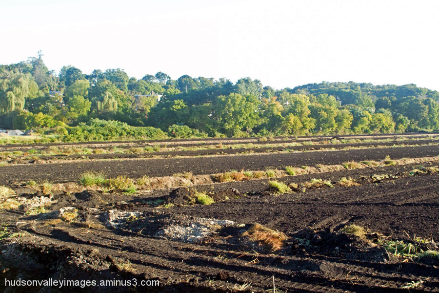 Black Dirt Onion Farm