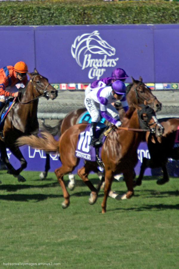2013 Breeders' Cup Juvenile Turf - Ontology