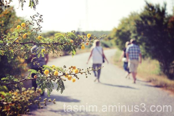 mimosa road