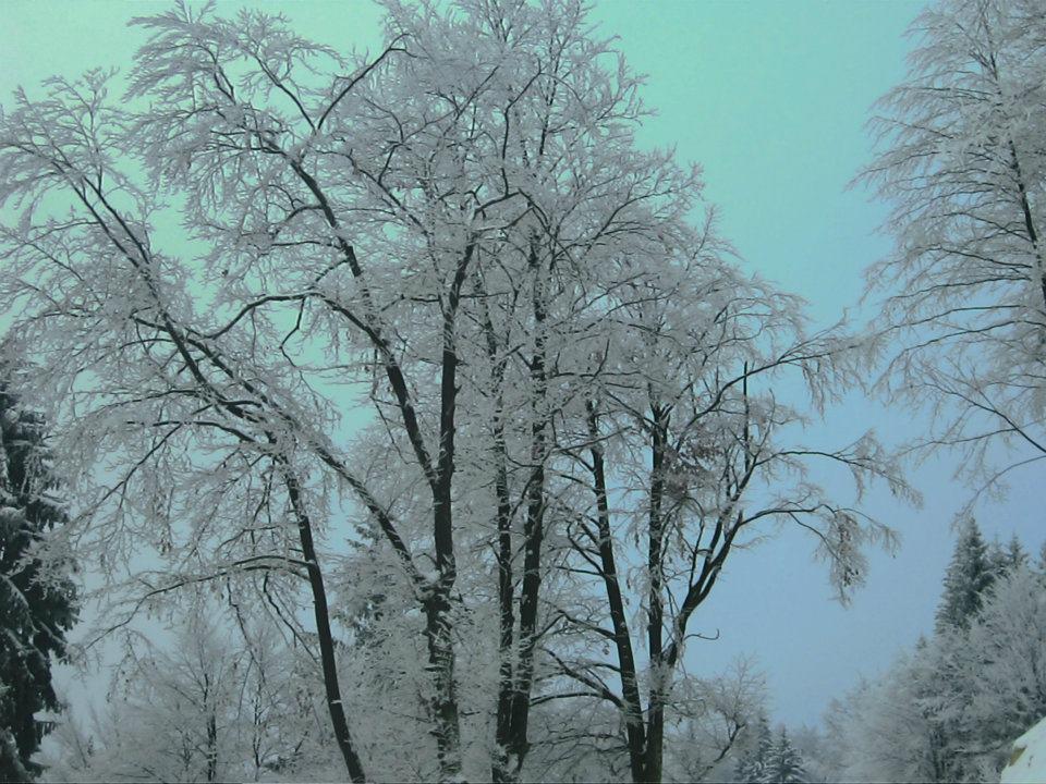 Iarna....dulce iarna