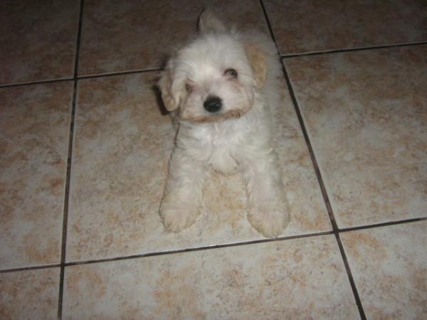 My Dog ( Zozo)