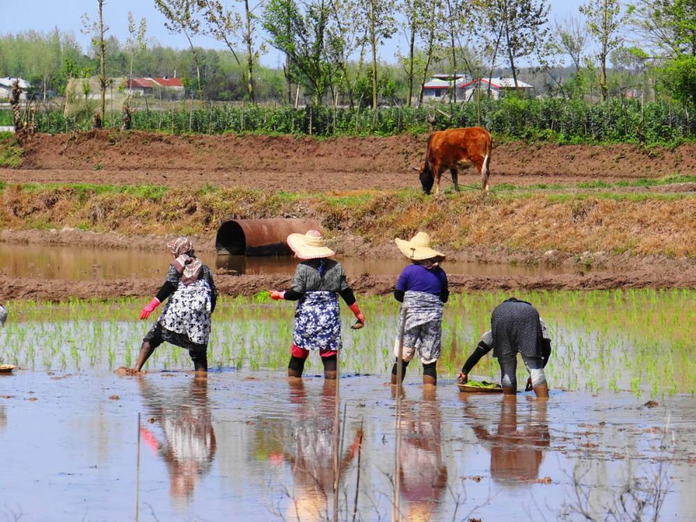 northwest tour iran travel gilan fooman rice