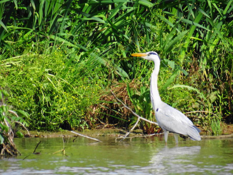 northwest tour iran travel Kingfisher anzali