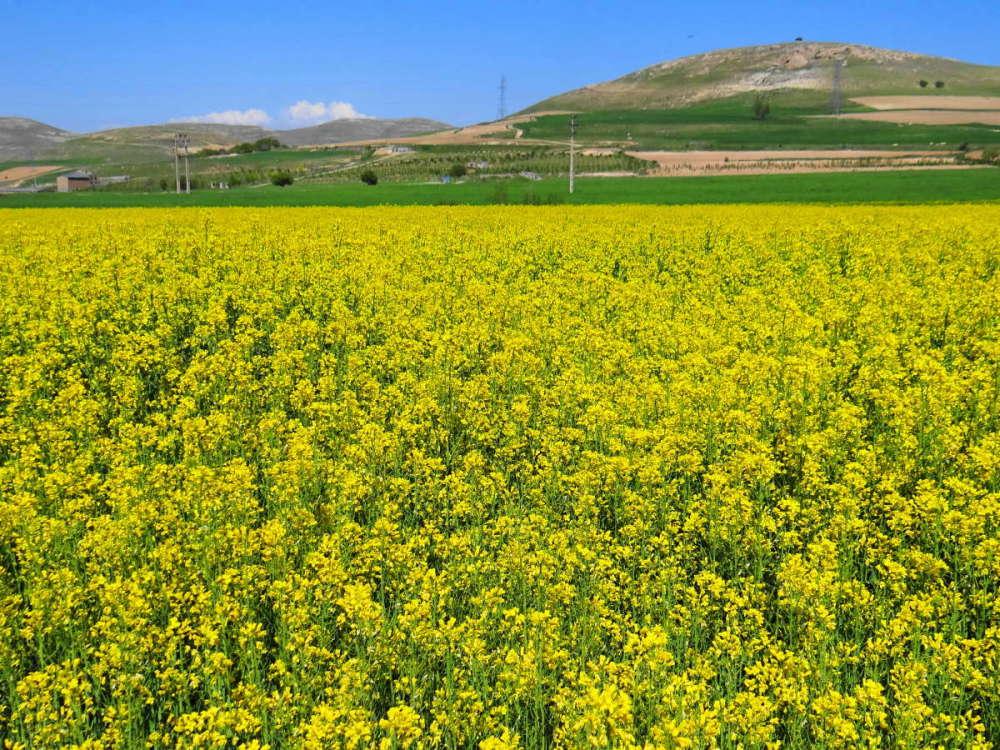 northwest tour iran travel bukan West-Azerbaijan