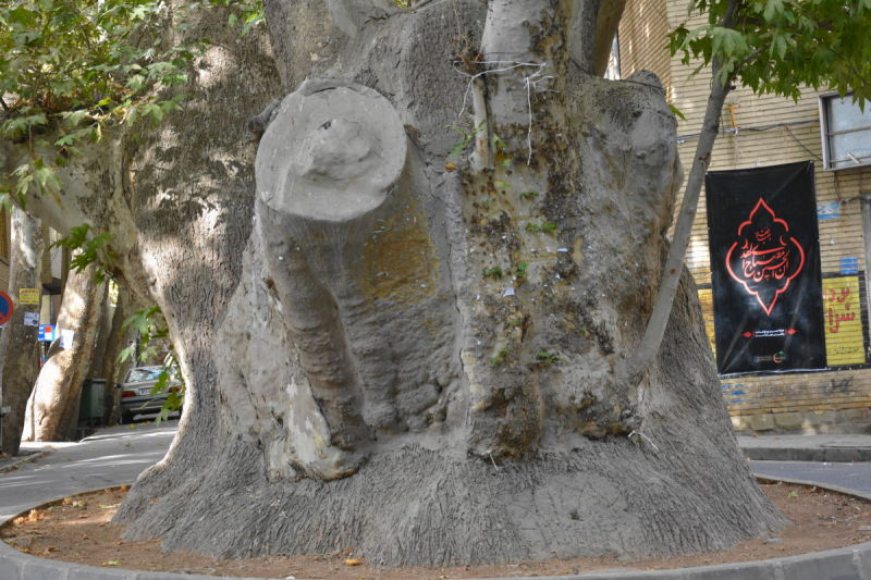 iran mahallat sar-cheshmeh سرچشمه محلات