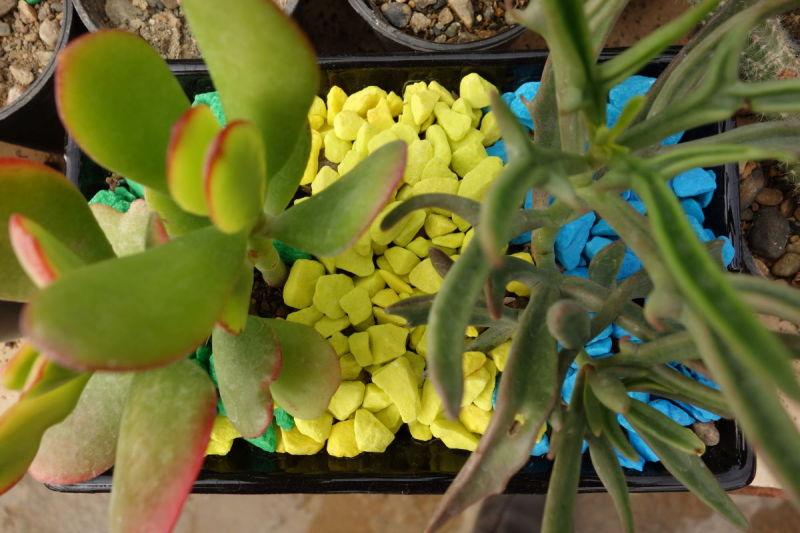 tour iran mahallat cactus