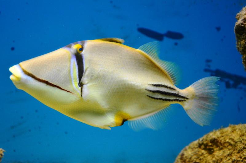 qeshm island hormozgan Aquarium جزیره قشم