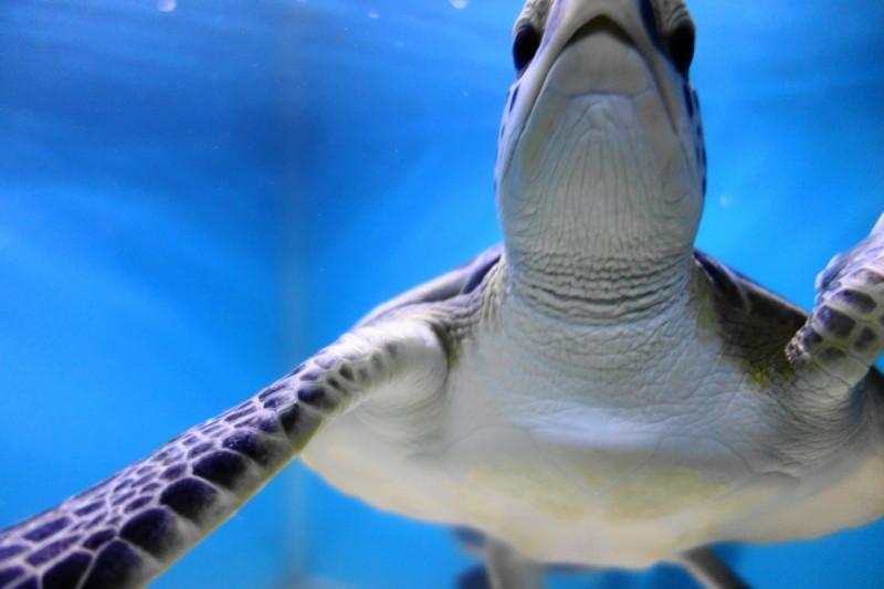 qeshm island hormozgan Aquarium Turtle جزیره قشم