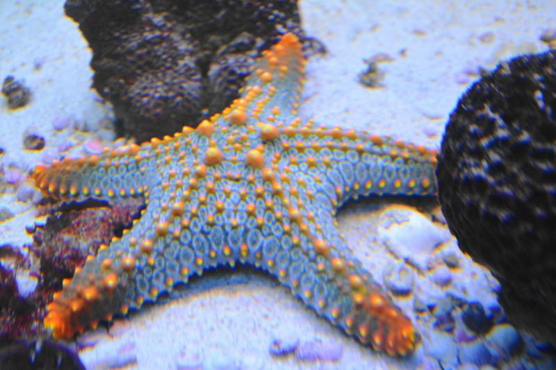 qeshm island hormozgan Starfish جزیره قشم