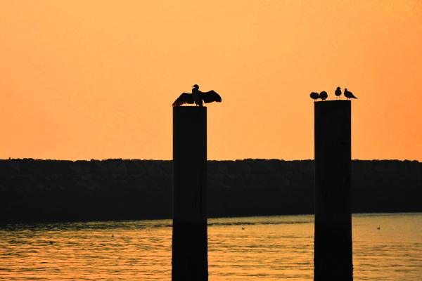 qeshm island persian-gulf bird sunset
