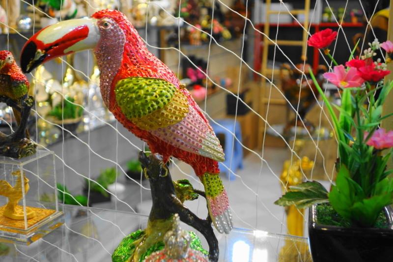 qeshm island persian-gulf bird
