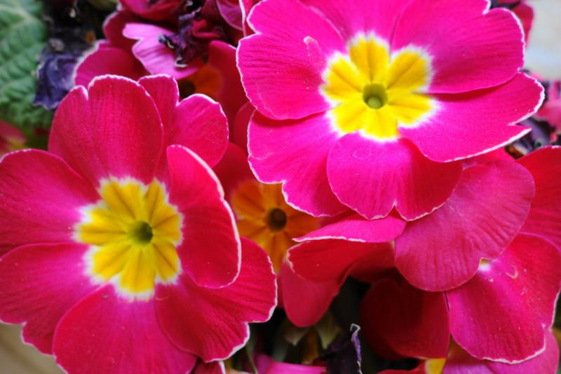 qeshm island persian-gulf pink heart