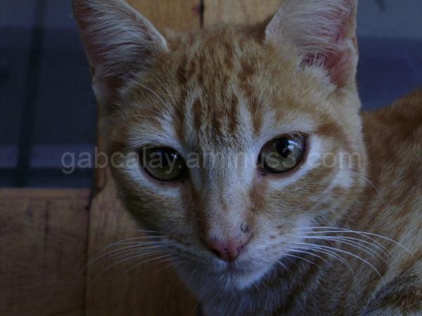 Cat staring at the camera