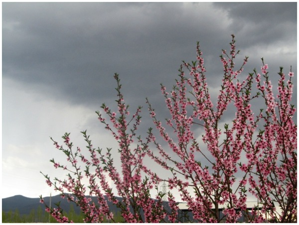 birth of spring(4)