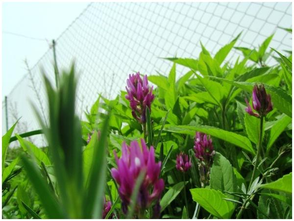 captured Flowers