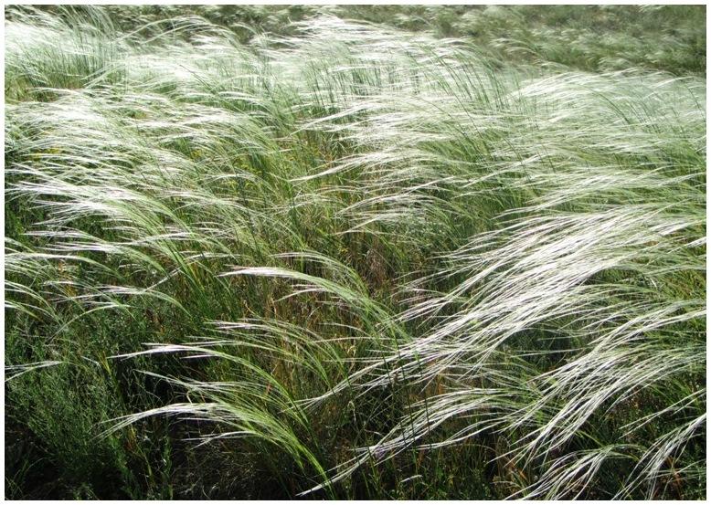 Grass Dance