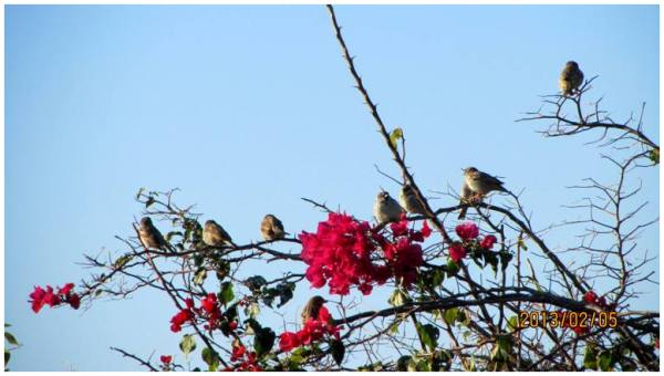 little Sparrows.1