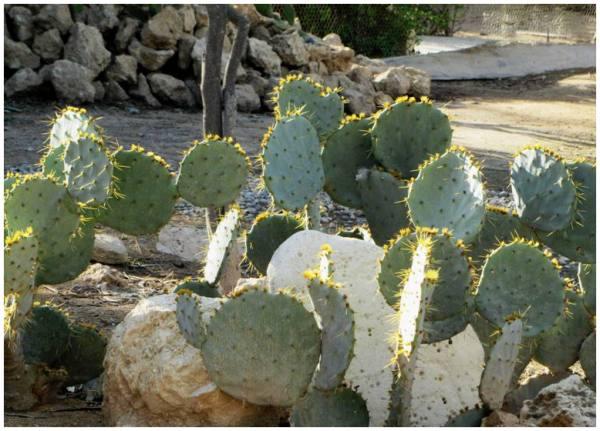 Cactus .2