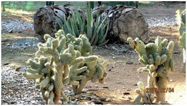 Cactus .4