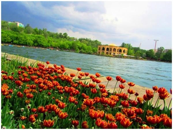 tabriz Tulip flower