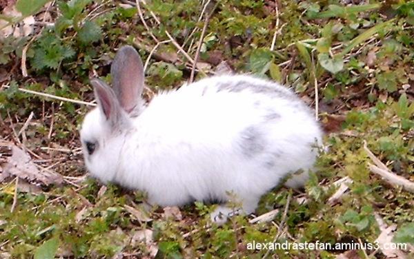 A litlle sweet rabbit....