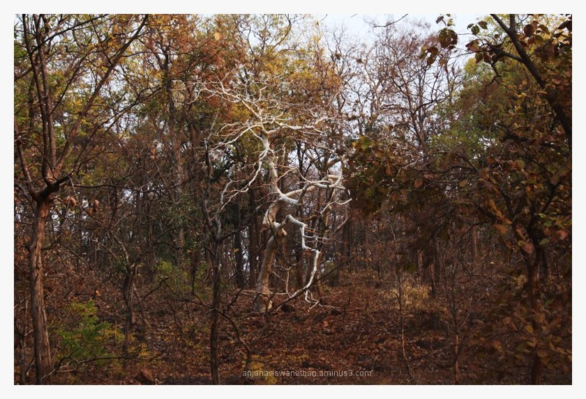 dancing ghost tree