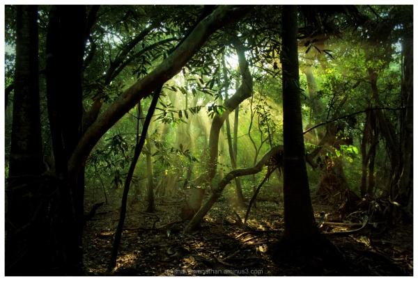 Landscape, Odisha, India