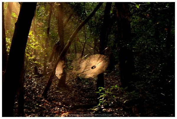 Odisha Landscape Nature