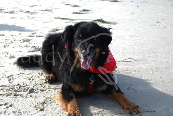 Riley at Pebble Beach