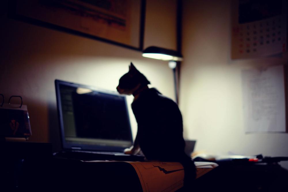 Silhouette, Cat :)