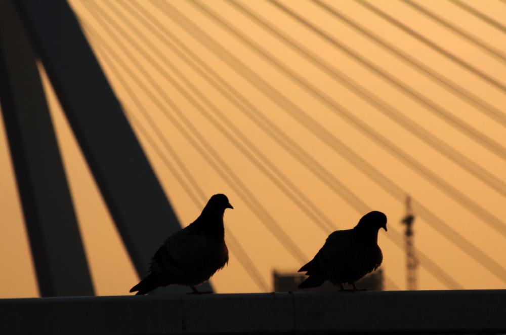 2 duiven