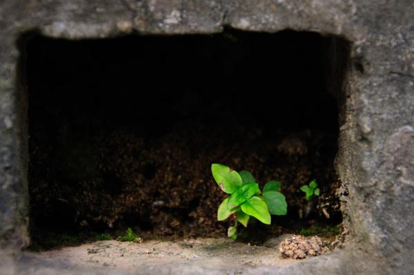 Plant, hole