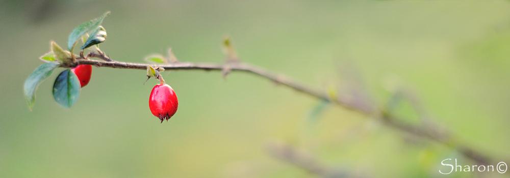 spring bud macro